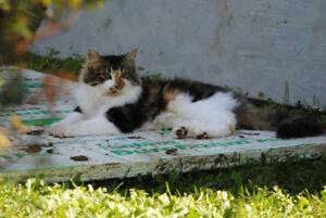Lost cat in Kakabeka