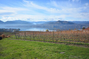 PRICE REDUCED! Vineyard Property with spectacular Lakeview