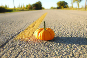 Ornamental Gourds and Pumpkins for Fall/Halloween Decorations/