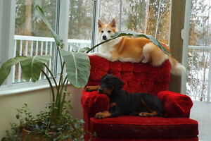 Dog care in my home, day or overnight -SALMON ARM