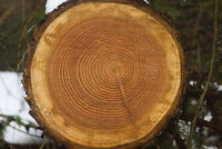 Want to Make Money Off Your Standing Timber?
