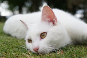 Beautiful, Loving Cat To Go To Good Home