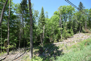 Haliburton Real Estate Team- County Road 21 , 44 Acres
