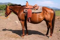 Registered quarter horse and Filly