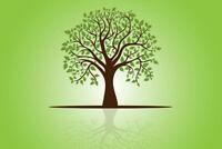 Poplar and Pine Tree Services