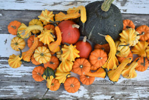 Decorative pumpkins and gourds for sale!