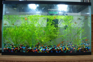 Fish tank with Fish and accessarys