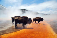 looking for a tour guide to yellowstone national park in Aug