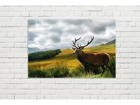 Luxury Stag Canvases