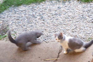 2 adorables petits chatons A DONNER!!!
