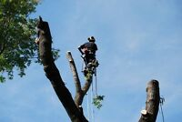 Tree removals, pruning,  stump grinding, ISA Certified Arborists