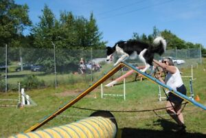 SATURDAY 10TH AUGUST, fun agility afternoon