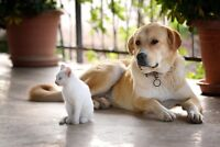 Healing for your pet