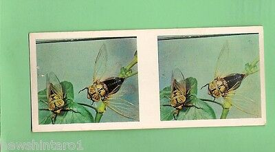 #D95.  LIPTON  TEA  4th  NATURE  SERIES  STEREO  CARD #7  YELLOW MONDAY CICADA