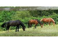 Wanted... Private stable yard/ small holding for long term rental WANTED