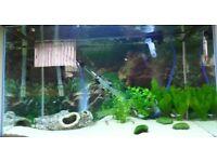 140 l aquarium *** Fish Tank **
