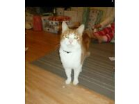 Home needed for my male cat
