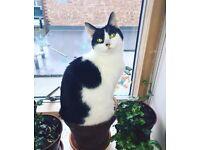 Lovely Junior Cat Luna