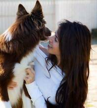 Pet lover !! Dog walk & Dog Sitter Currumbin Gold Coast South Preview