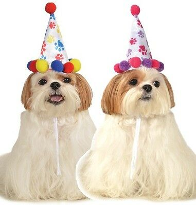 Groß Kleintier Haustier Hund Katze Geburtstag Pawty Party - Großer Hund Kleiner Hund Kostüme