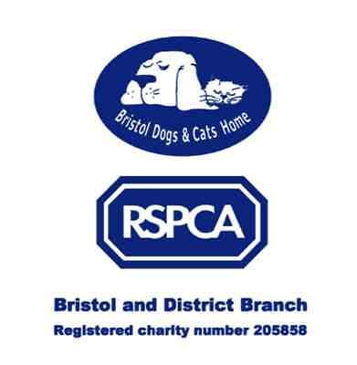 Bristol Dogs Home