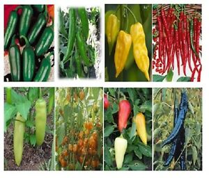 500 Seeds 12 Kinds Of Hot Pepper Mix Chili Pepper Seeds