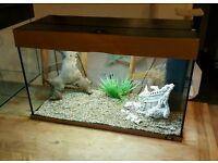 Jewel 125 fish tank aquarium