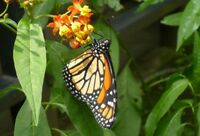 Volunteer program at the Butterfly Garden in Costa Rica