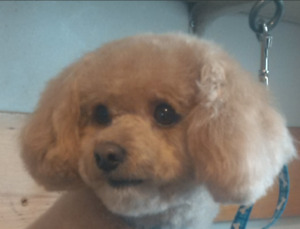 Grooming find or advertise pet animal services in kitchener erbsville pet grooming 519 746 0909 solutioingenieria Gallery