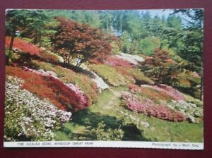 POSTCARD-BEDFORDSHIRE-WINDSOR-GREAT-PARK-THE-AZALEA-BOWL