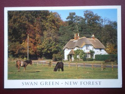POSTCARD HAMPSHIRE SWAN GREEN - NEW FOREST - PONIES IN FIELD