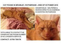 GINGER MALE CAT FOUND - BRAMLEY, ROTHEHRAM - END OF OCT 2016