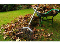 A1 Gardening Service, General Cleaning, Lawn Mowing, Hedge Cutting, All Areas covered.Quality Work