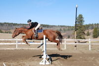 Horse Boarding and facility for Developing & Riding  Horses