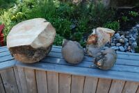 WOODEN BURLS SUITABLE FOR CARVING