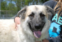 Dazzle is looking for her own home! ShepherdXcollie