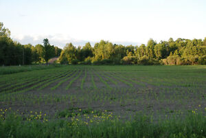 Farm For Sale Eastern Ontario (With Passive Income) Cornwall Ontario image 8