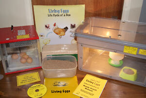 Chick hatching program for school