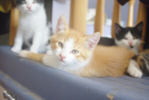 Selling 3 beautiful kittens to good homes.