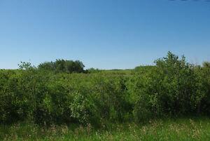 Pristine, uncultivated land for sale near Alvena, Saskatchewan