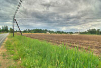 27+ Acre Blueberry Farm Land Opportunity