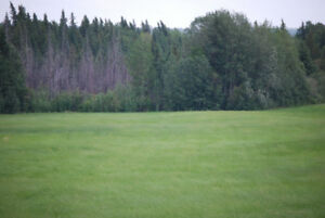 80 Acres Athabasca County