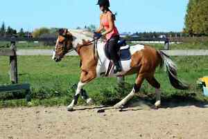 Show mare for part-board  Stratford Kitchener Area image 5