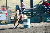 16 year old registered All-Around Palomino Mare