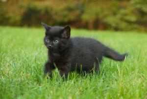 Mignon petit chaton