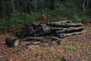 Free Firewood! Stay warm this winter! Kitchener / Waterloo Kitchener Area image 7