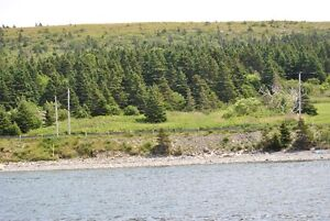 Oceanfront Property for Sale - Hr. Grace South, NL. St. John's Newfoundland image 2