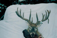 saskatchewan whitetail hunts for canadien residents