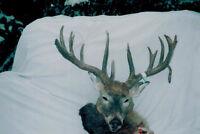 saskatchewan whitetail hunts for canadien residents