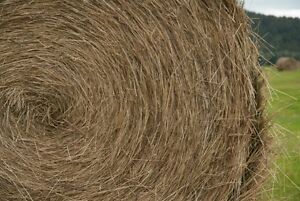 ISO LARGE BALES